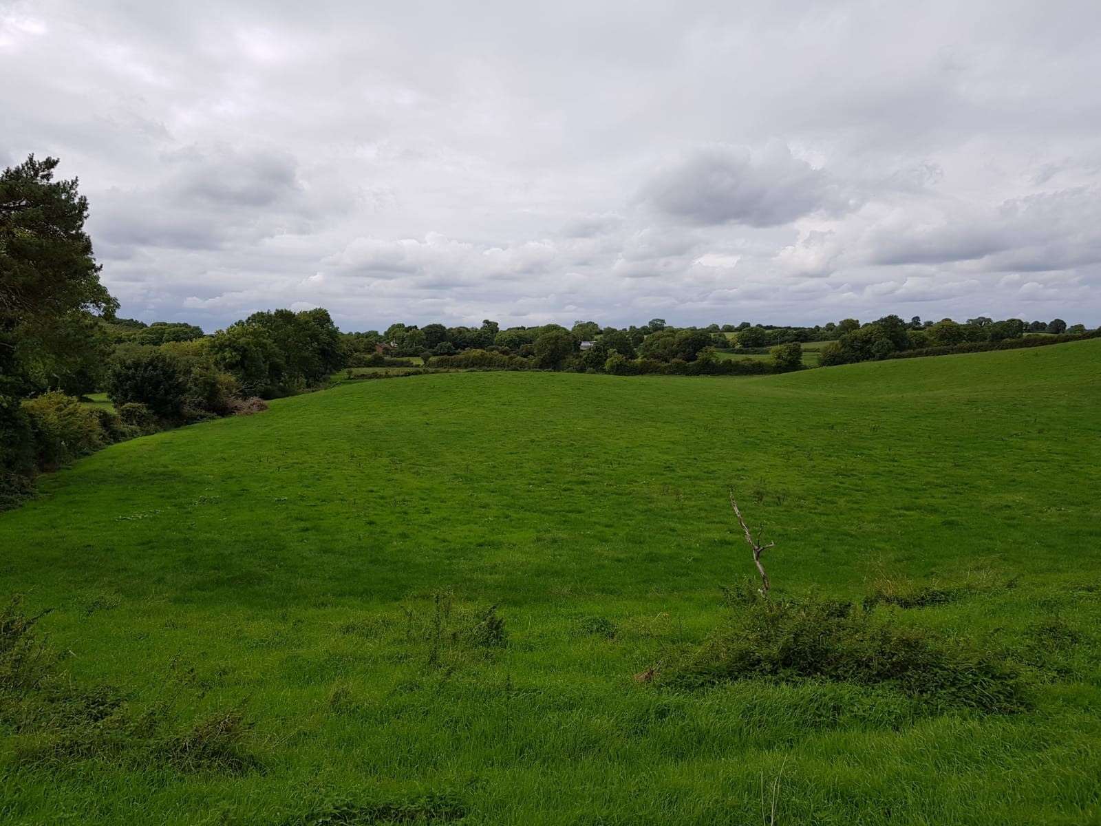 43.28 Acres (or thereabouts) of Quality, Agricultural Lands Adjacent to No 171 Clay Road